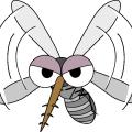 蚊 に 刺されやすい ! 嫌 な 蚊 の 対策