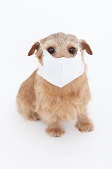 意外なことに花粉症対策におすすめのマスクとは