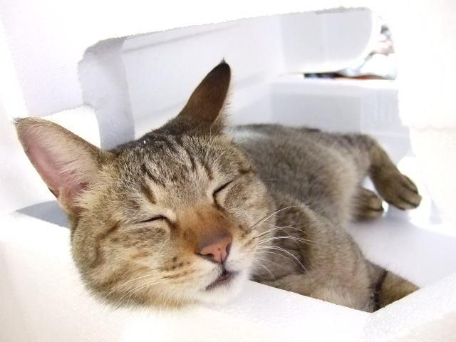 満腹で寝るのは気持ち良いんだけど、健康への悪影響も大きいんですよ