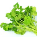 最強の野菜「クレソン」の栄養と効能