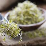 簡単栽培ブロッコリースプラウト!がん予防の効果もあり