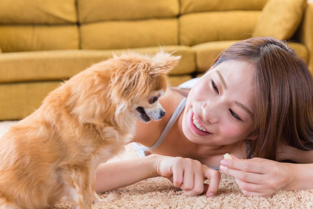 コレでお客さんも呼べる!犬の臭いがする部屋を消臭する方法