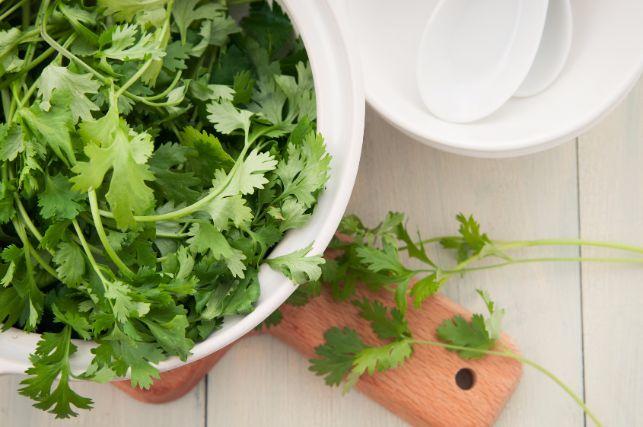 食べても嗅いでも良い!栄養豊富で話題の「パクチー」の基礎知識